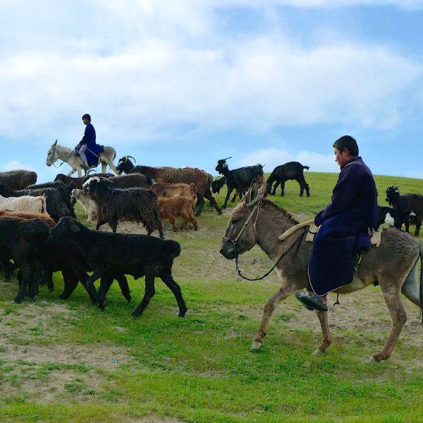 uzbekistan bambini cavalli
